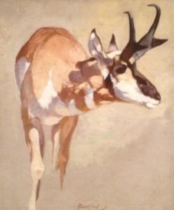 Pronhorn Deer study by Carl Runguis.