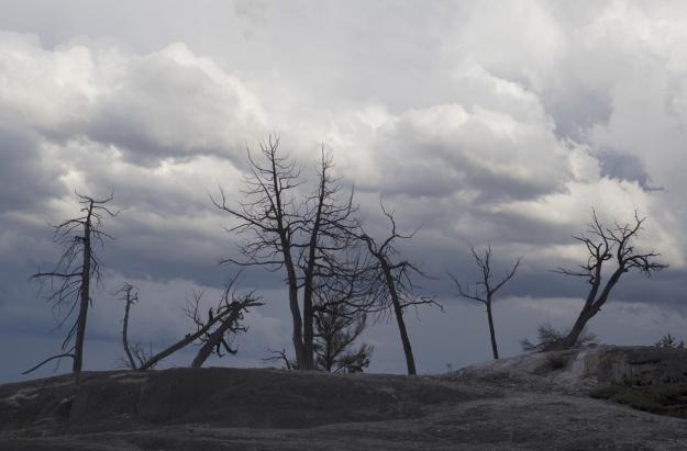 'Petrified Trees' copyright Andrew Hodgson 2013